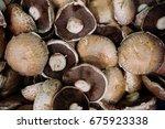 Bulk Lot Fresh Raw Mushrooms.