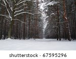 Winter forest over in Poland - stock photo