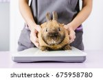Stock photo veterinarian doctor is making a check up of a rabbit veterinary concept 675958780