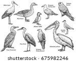 collection of birds...   Shutterstock .eps vector #675982246