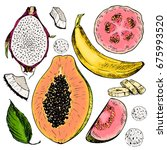 hand drawn set of exotic... | Shutterstock . vector #675993520