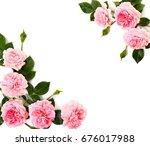 frame of pink roses  shrub rose ...   Shutterstock . vector #676017988