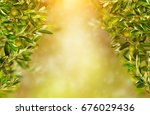 Olive Branches Background ...