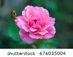 the photos are beautiful... | Shutterstock . vector #676035004