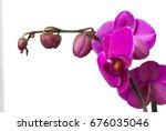 beautiful background of fresh...   Shutterstock . vector #676035046