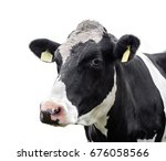 cow on a white background | Shutterstock . vector #676058566