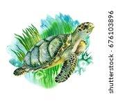 Sea Green Turtle With Seaweed...