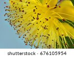 Small photo of Hypericum calycinum flower, also known as St John's wort, Rose of Sharon and Aaron's beard in closeup