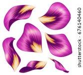 Purple Flower Petals  Botanica...