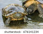 turtle head close up turtle... | Shutterstock . vector #676141234