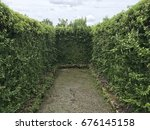 Vine Plant Wall On Dead End In...