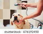 bathing of the yellow labrador... | Shutterstock . vector #676192450