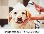 Stock photo bathing of the yellow labrador retriever happiness dog taking a bubble bath 676192459