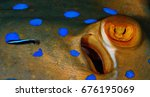 red sea   egypt   blue spotted... | Shutterstock . vector #676195069