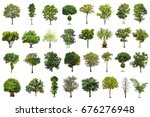 isolated tree on white... | Shutterstock . vector #676276948