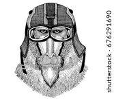 monkey  baboon  dog ape  ape... | Shutterstock . vector #676291690