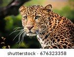 the portrait of javan leopard  | Shutterstock . vector #676323358