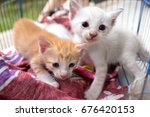 two abandoned kittens with sad... | Shutterstock . vector #676420153