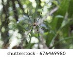 Small photo of Spiders are air-breathing arthropods that have eight legs and chelicerae with fangs that inject venom. They are the largest order of arachnids and rank seventh in total species diversity .