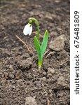 white snowdrop flowers ... | Shutterstock . vector #676481809