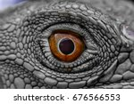 iguana eye it's like the eye of ... | Shutterstock . vector #676566553