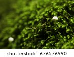 mushrooms and moss in the forest | Shutterstock . vector #676576990