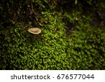 mushrooms and moss in the forest | Shutterstock . vector #676577044