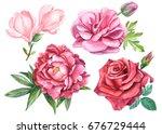 Set Of Roses  Peony  Magnolia ...