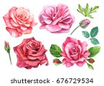 set of roses  peony  ranunculus ... | Shutterstock . vector #676729534