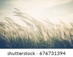 Small photo of Reed field waver in the wind, vintage color