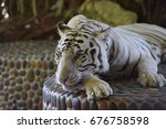 white tiger with a chain around ... | Shutterstock . vector #676758598