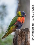 wild colourful lorikeet sitting ... | Shutterstock . vector #676764286
