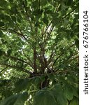 mulberry  tree | Shutterstock . vector #676766104