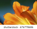 Vivid Flower Background With...