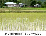 rice in the field thailand. | Shutterstock . vector #676794280