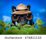 french bulldog  dog  ... | Shutterstock . vector #676811110