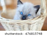 Stock photo blue eyed kitten 676815748