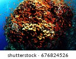 egypt   red sea   diving at... | Shutterstock . vector #676824526