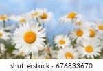 chamomile flowers field wide... | Shutterstock . vector #676833670