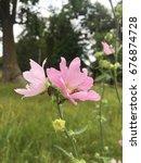 flower and beetles | Shutterstock . vector #676874728