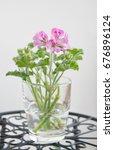 geranium fragrance  pelargonium ... | Shutterstock . vector #676896124