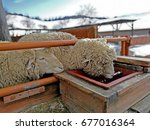A Sheep Is Drinking Water From...