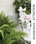 balcony flowers | Shutterstock . vector #677047558