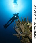 diver and a coral   Shutterstock . vector #677065954