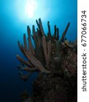 coral reef in the red sea   Shutterstock . vector #677066734