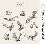 collection of realistic eagles  ... | Shutterstock .eps vector #677099110
