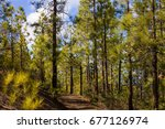spruce forest. sustainable... | Shutterstock . vector #677126974
