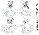 bulldog with glasses  vector ... | Shutterstock .eps vector #677143168