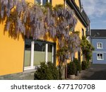 Gorgeous Wisteria  A Member Of...