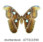 the biggest night butterfly in... | Shutterstock . vector #677211550